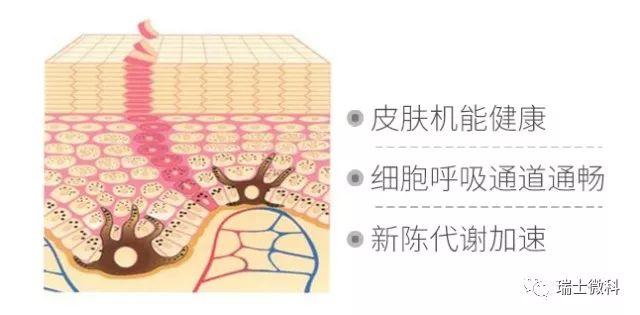 皮肤机能健康、细胞呼吸通道通畅、新陈代谢加速