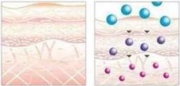 """4D紧肤疗程建立""""活细胞营养仓库"""",在皮肤内缓慢释放,持续供给皮肤细胞营养,令细胞健康、有活力。"""