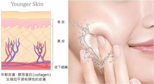 年轻皮肤,胶原蛋白支撑起平滑有弹性的皮肤