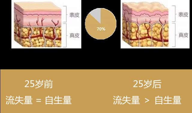 皮肤胶原蛋白25岁前后流失情况