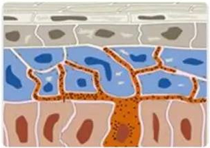 瑞士微科细胞修复抗衰老